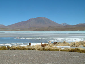 Baroud Pérou 10