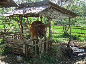 Indonésie 2008 14
