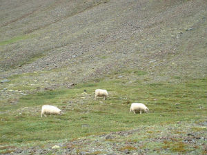 Islande 2006 35
